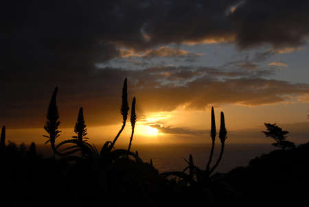 flowering aloe: Sun setting over the Atlantic Ocean with silhouetted aloe in the foreground, Suikerbossie, Cape Town, South Africa