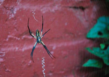 Spider closeup
