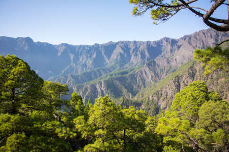 pinar: Forest of Canary Island Pine with mountains  Stock Photo