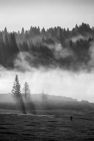 私はその霧の朝、暖かい太陽の光と、これらの日、私は遠く離れた街の雑踏から自然の光景を楽しんで、バイエルン州で撮影した、美しい日の出。