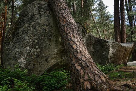 tree on a stone in the forest