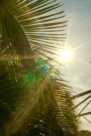 Backlit palm leaves on a sunny day with the sun in front in the form of a star and natural reflections in the image. Concept of summer.