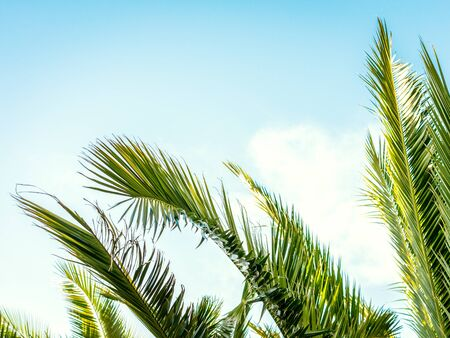Palm leaves over the blue sky with a few clouds on a beautiful summer day. Holiday concept.
