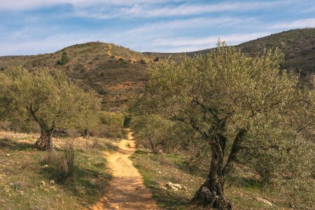 On the way to Las Cárcavas in Madrid, Spain, with olive trees around. Nature concept.