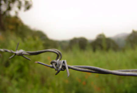 wire fence: fence wire