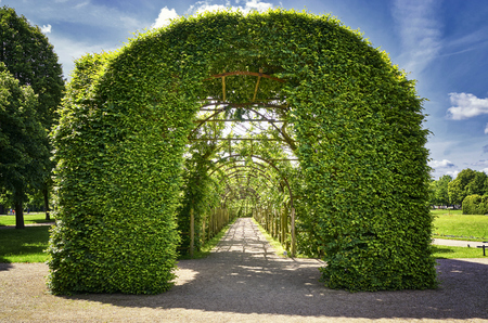 Garden portico , coverd by tendrils Stock Photo