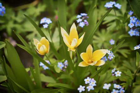 Colorful spring flowers in a forest. Stock Photo