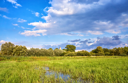 Marshy meadow with clouds in the background.