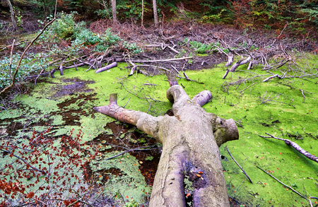 Broken tree and many branches in the swamp at the forest.