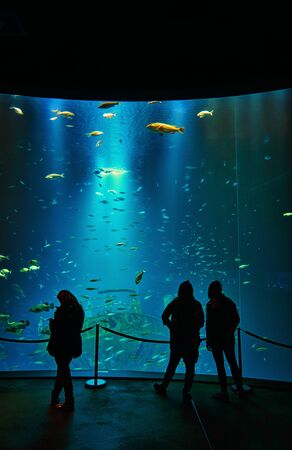 Silhouettes of people in front of a giant aquarium in a museum. 写真素材