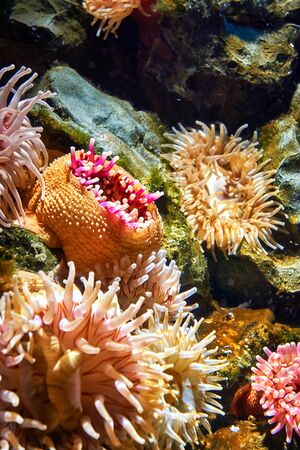 Marine life with sea anemone under water.