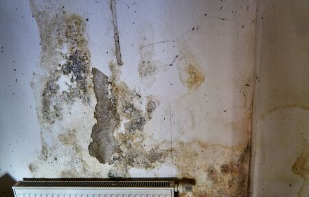 Mold on the wall over a radiator. Stockfoto
