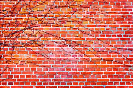 Brick wall background with autumn leaves.