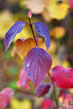 Autumn colors on the leaves with blurred colorful background.