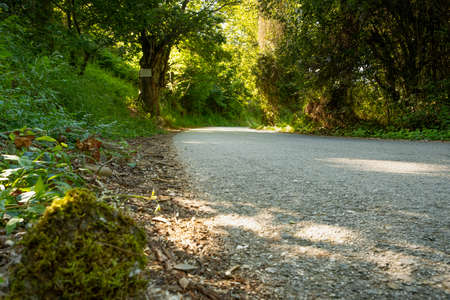 path in the middle of chestnut trees on the roads of northern Spain with vegetation and very green moss. Imagens