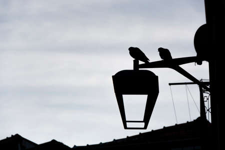 Silhouette of pigeons on the top of a vintage street light. Porto, Portugal Imagens
