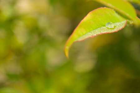 Close-up of a green leaf with a droplet of water. Reflection in the droplet. Colorful background and warm light. Imagens