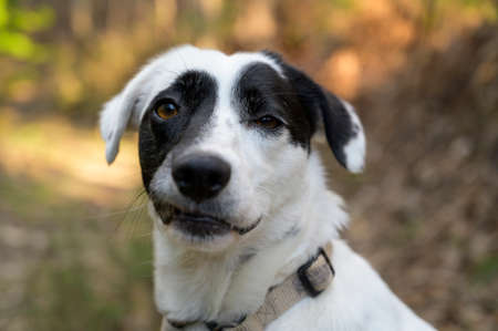 Cute black and white dog looking at the camera. Funny expression. Colorful background. Imagens