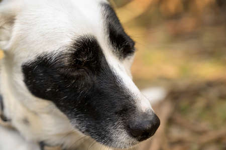 Cute black and white dog with closed eyes. Cute expression. Colorful background.