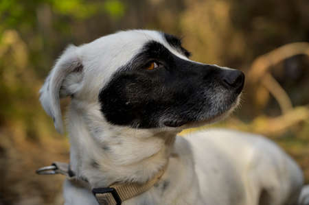 Cute black and white dog looking at the camera. Side view. Colorful background. Imagens