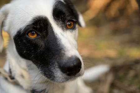 Black and white dog looking at the camera. Cute expression. Colorful background. Imagens