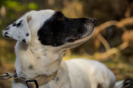 Cute black and white dog sniffing with eyes closed, looking at the distance. Side view. Colorful background. Imagens