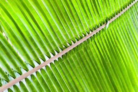 macroshot: Palm Leaf