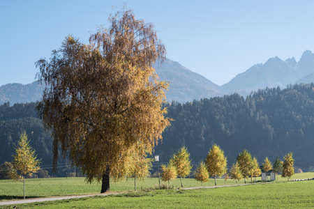 trees autumn fall colors sky. Standard-Bild