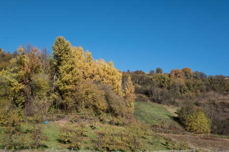 autumn trees wood sky fall.