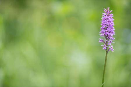 flower orchid alps violet purple.