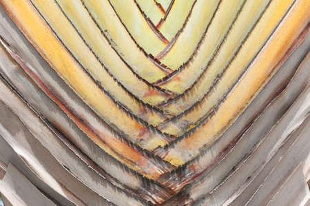 Palm Leaf Close-up natural structur.