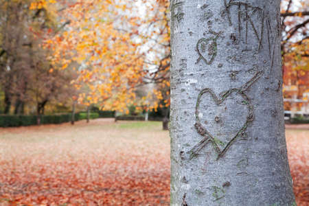 hearts background: Heart-shape on trunk bark with a autumnal background Stock Photo