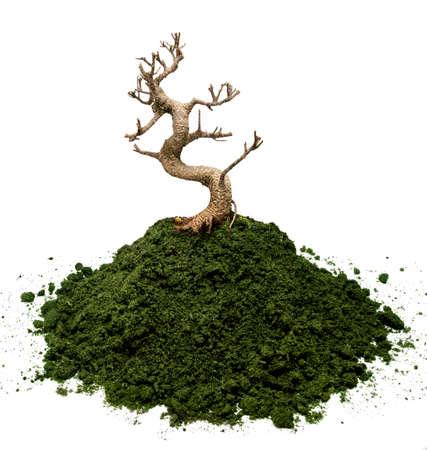 dead tree: Bonsai tree plant on a moss ground