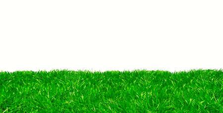 Studioaufnahme von grünem Rasen vor weißem Hintergrund Standard-Bild