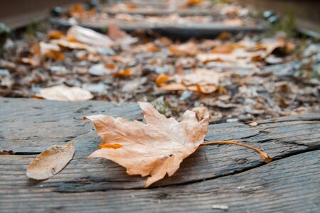 Autumn Leaves over wooden backgound Imagens