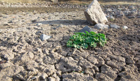 Green plant in dried cracked earth Standard-Bild