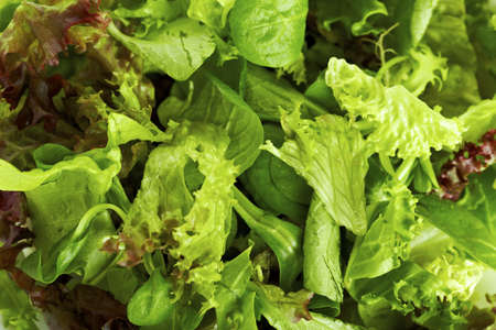 Pattern of mixed lettuce / salad, fresh vegetarian Stock Photo - 9998062