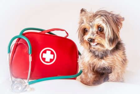 Dog with emergency or first aid kit and stethoscope. Foreground. Yorkshire terrier.