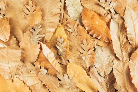 Yellow and Orange autumn leaves background. Outdoor. Colorful background image of fallen autumn leaves. Space for text.