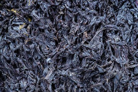 Dried seaweed texture background