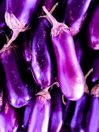 Bright purple eggplant. For cooking and an ingredient of any healthy, light dish.