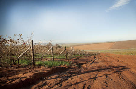 Dried autumn vineyards in the Swartland wine region of South Africa, sowing farmland and red soil.