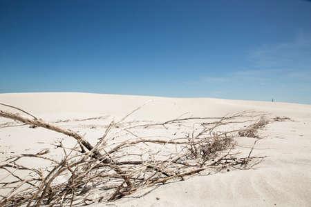 Arid Beach landscape in South Africa