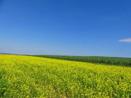 biomasa: bonito campo de la violación