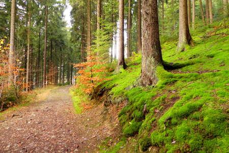wonderful pathway in HunsrÃÆà † Ã, Ã,¼ck Stock Photo