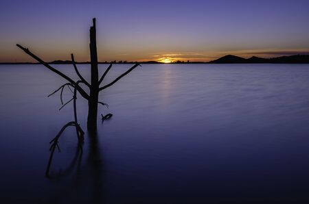 blue dusk in a swamp with tree in the foreground Stock Photo