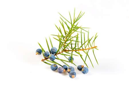 juniper: Juniper twig on a white background Stock Photo