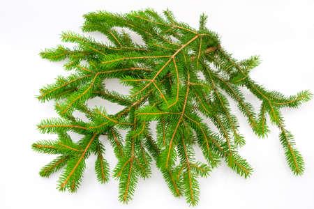 pine needles close up: Fir branch  Stock Photo