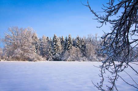 skying: Winter Stock Photo