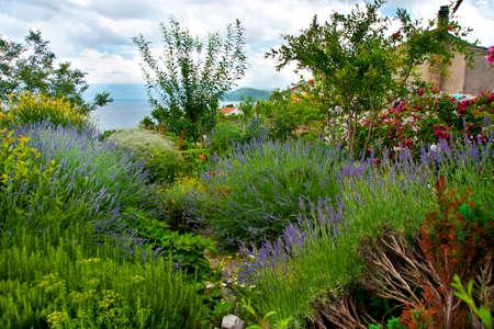 rosemary flower: Mediterranean garden